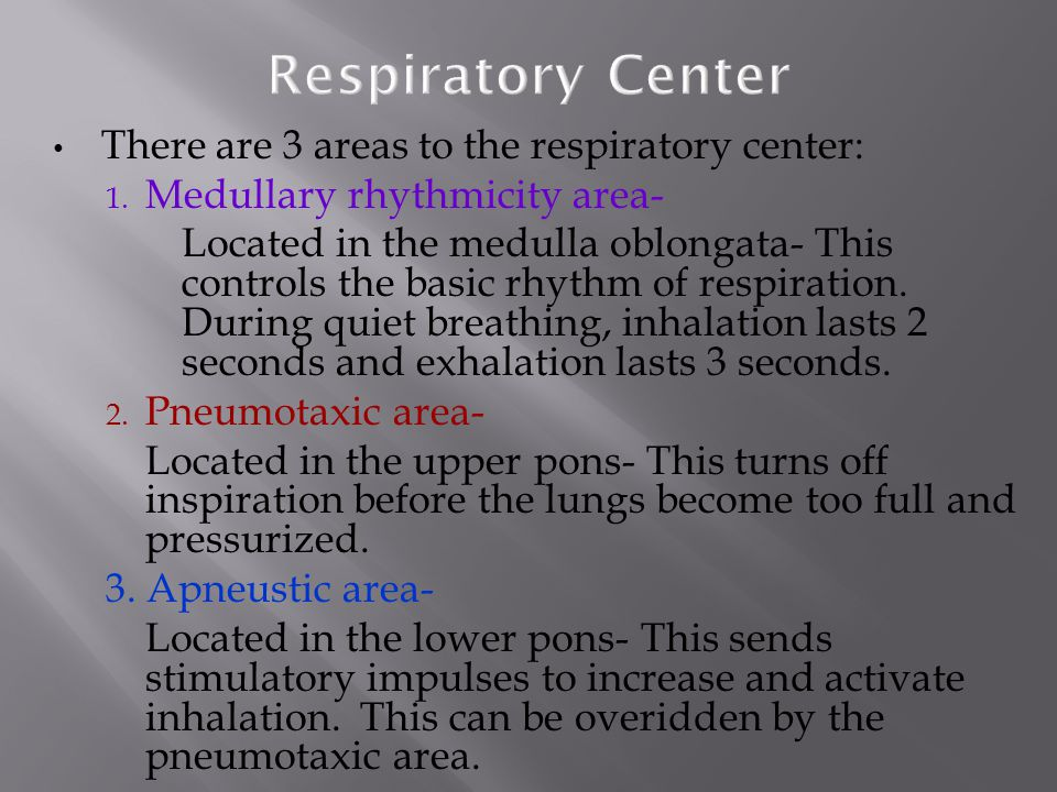 Respiratory Center There are 3 areas to the respiratory center: