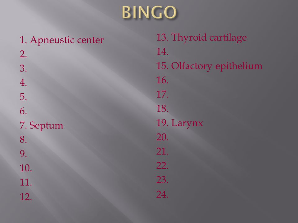 BINGO 13. Thyroid cartilage 14. 15. Olfactory epithelium 16. 17. 18. 19. Larynx 20. 21. 22. 23. 24.