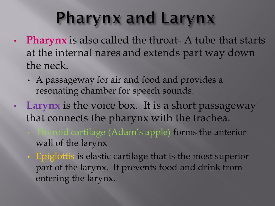 Pharynx and Larynx Pharynx is also called the throat- A tube that starts at the internal nares and extends part way down the neck.