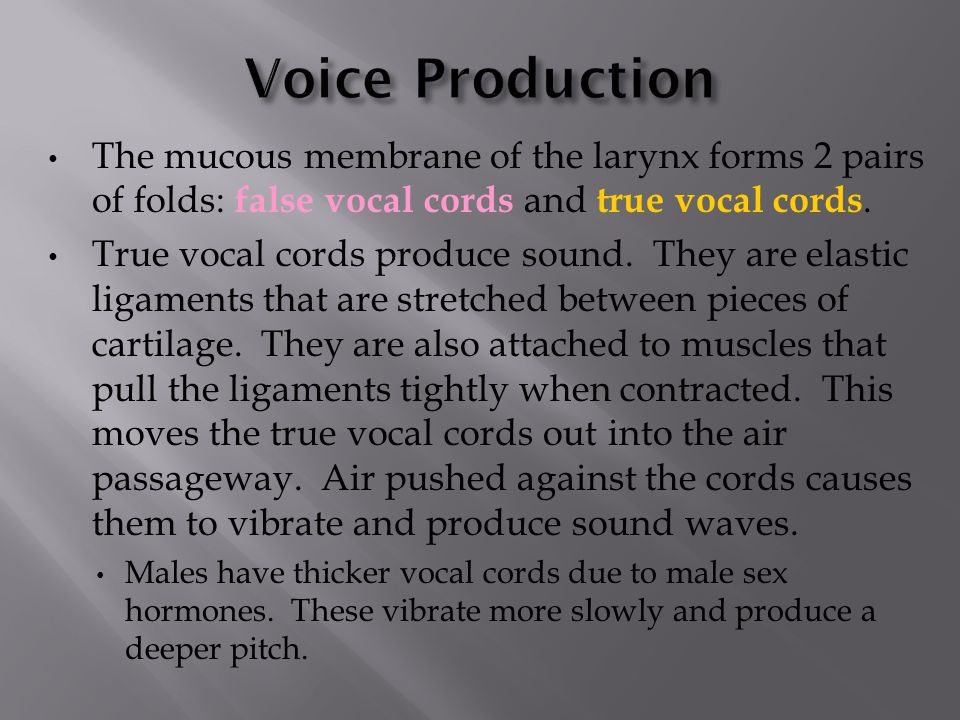 Voice Production The mucous membrane of the larynx forms 2 pairs of folds: false vocal cords and true vocal cords.