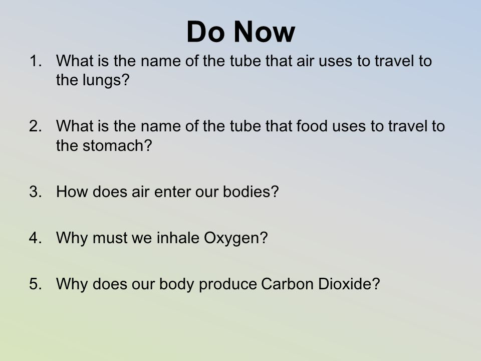 Do Now What is the name of the tube that air uses to travel to the lungs What is the name of the tube that food uses to travel to the stomach