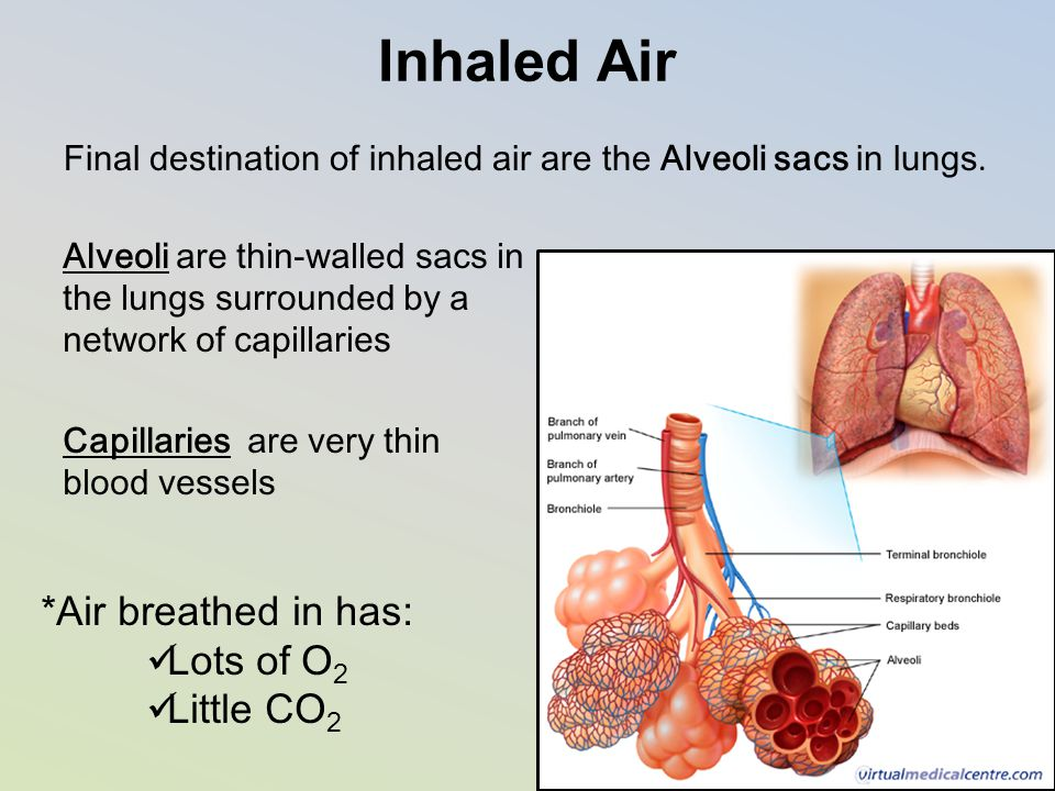 Inhaled Air *Air breathed in has: Lots of O2 Little CO2