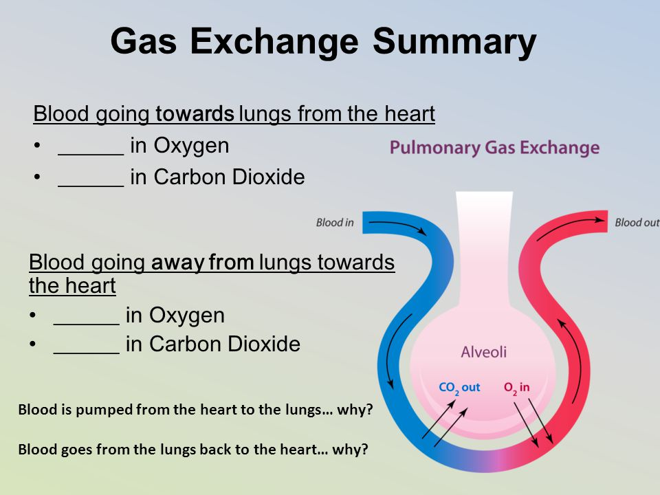 Gas Exchange Summary Blood going towards lungs from the heart