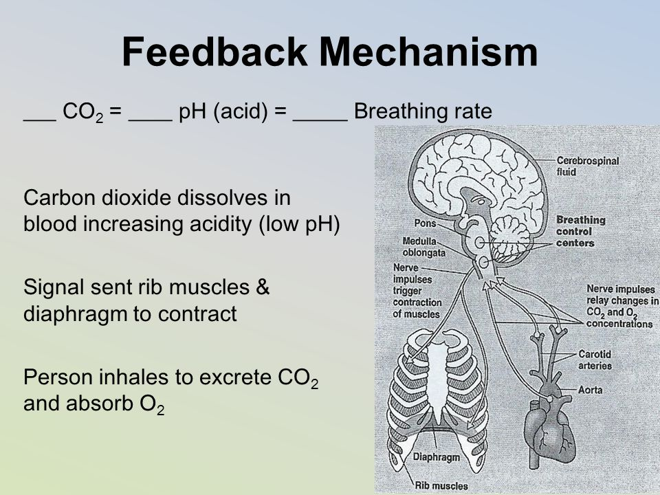 Feedback Mechanism ___ CO2 = ____ pH (acid) = _____ Breathing rate