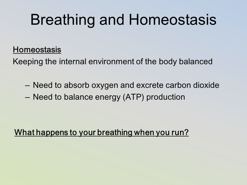 The respiratory system and homeostasis.
