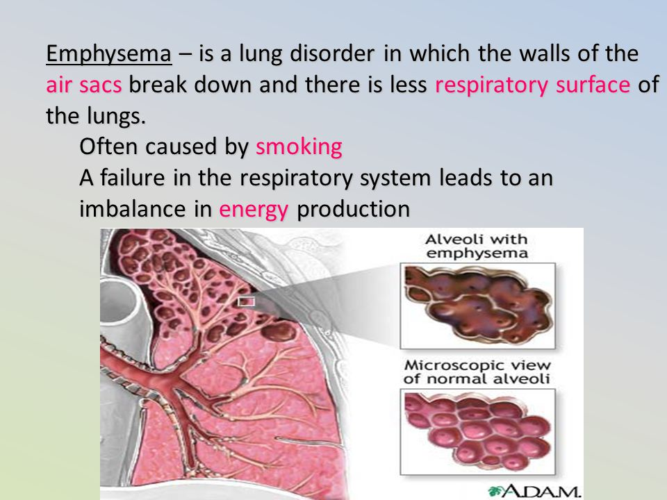 Emphysema – is a lung disorder in which the walls of the air sacs break down and there is less respiratory surface of the lungs.