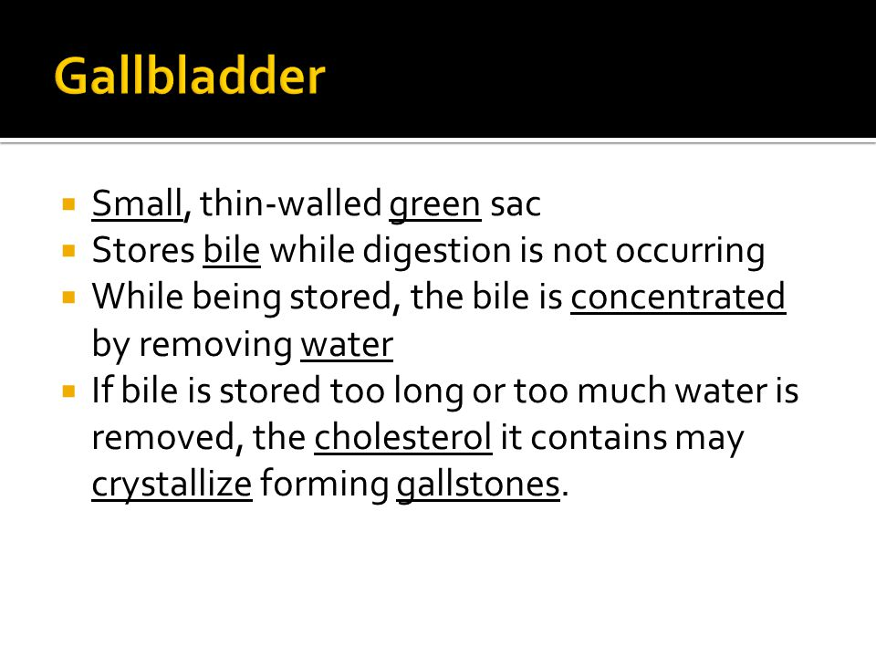 Gallbladder Small, thin-walled green sac