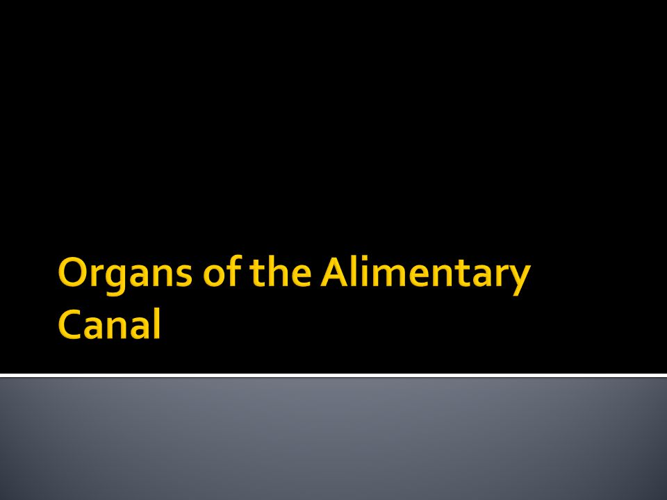 Organs of the Alimentary Canal