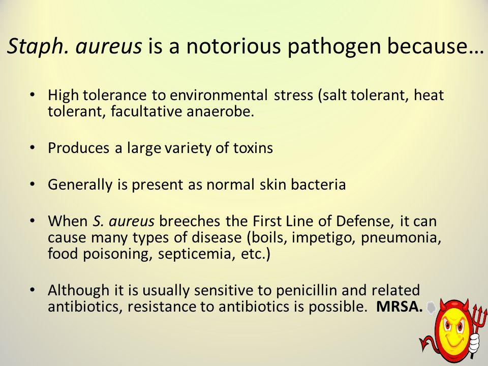 Staph. aureus is a notorious pathogen because…