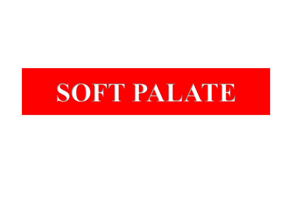 SOFT PALATE