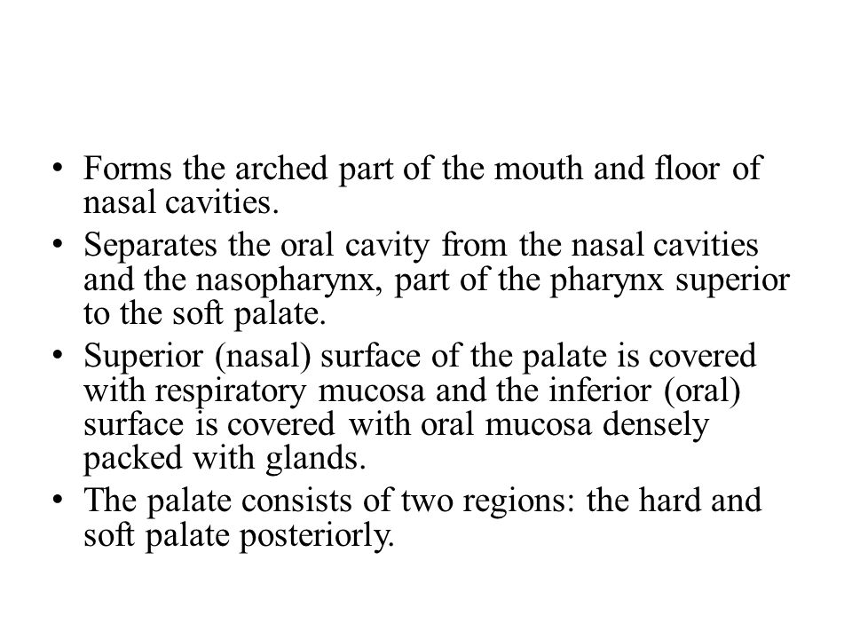 Anatomy of swallowing strucures muscles nerves vascular for Floor of nasal cavity