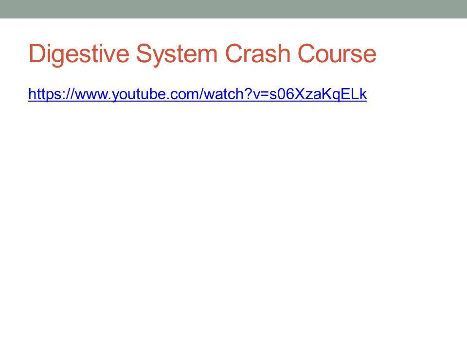 Digestive System Crash Course