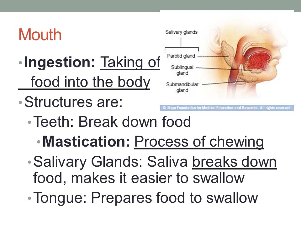 Mouth Ingestion: Taking of food into the body Structures are: