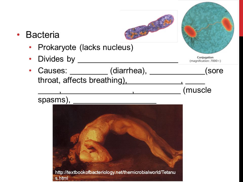 Bacteria Prokaryote (lacks nucleus) Divides by
