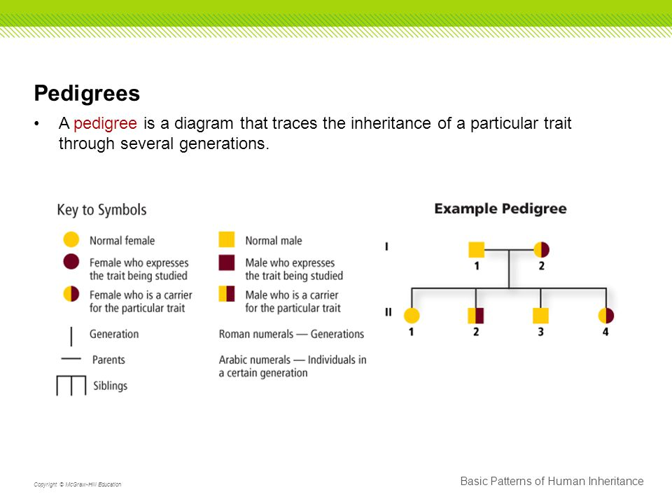 Pedigrees A pedigree is a diagram that traces the inheritance of a particular trait through several generations.