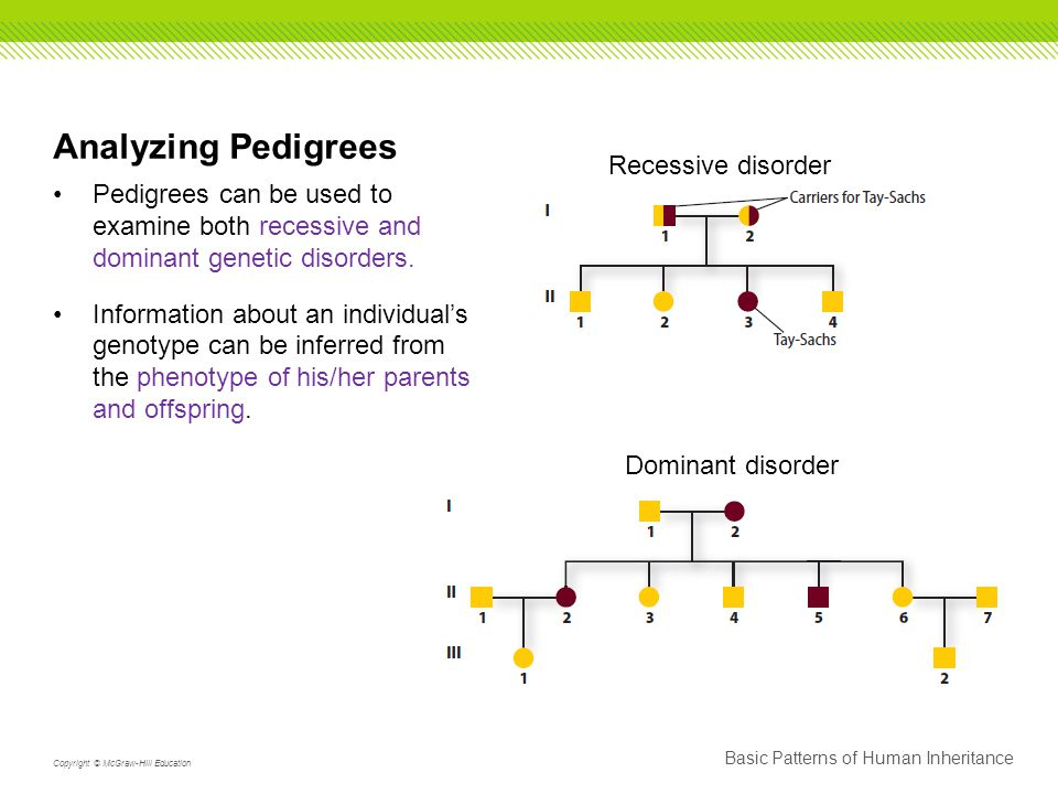 Analyzing Pedigrees Pedigrees can be used to examine both recessive and dominant genetic disorders.