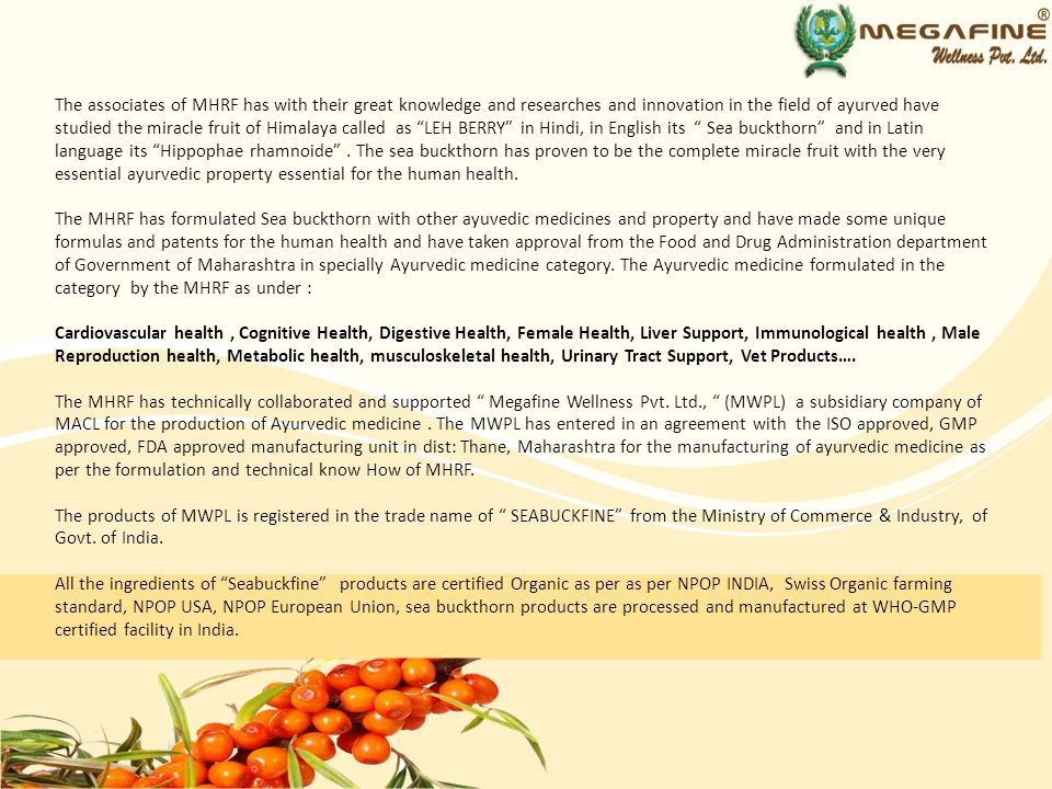 The associates of MHRF has with their great knowledge and researches and innovation in the field of ayurved have studied the miracle fruit of Himalaya called as LEH BERRY in Hindi, in English its Sea buckthorn and in Latin language its Hippophae rhamnoide . The sea buckthorn has proven to be the complete miracle fruit with the very essential ayurvedic property essential for the human health.