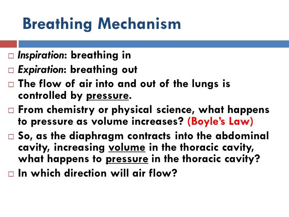 Breathing Mechanism Inspiration: breathing in