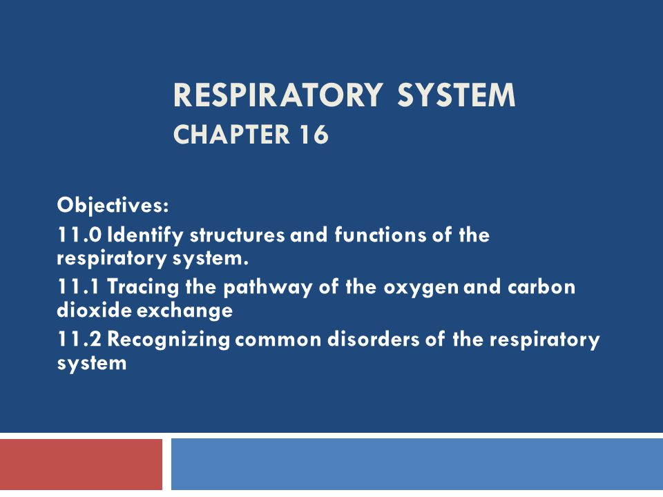Respiratory System Chapter 16