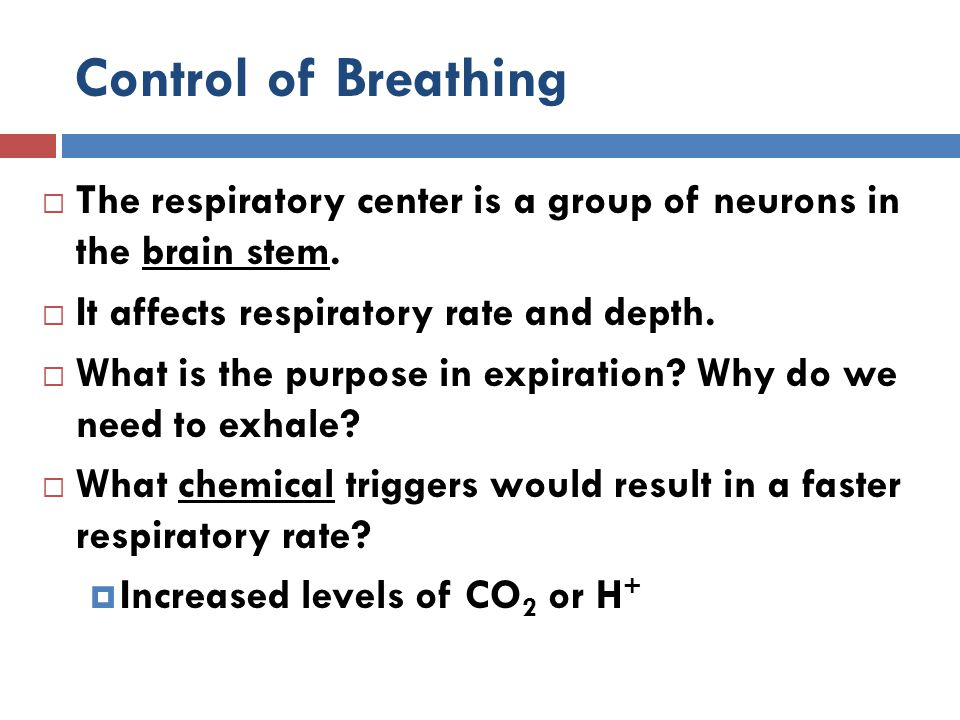 Control of Breathing The respiratory center is a group of neurons in the brain stem. It affects respiratory rate and depth.
