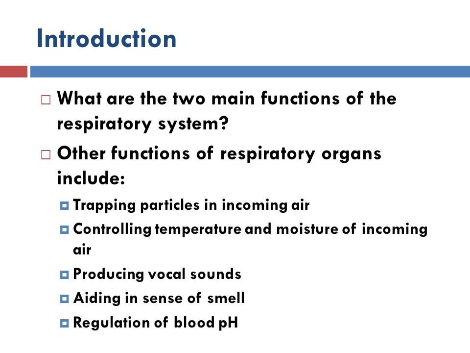 Introduction What are the two main functions of the respiratory system Other functions of respiratory organs include: