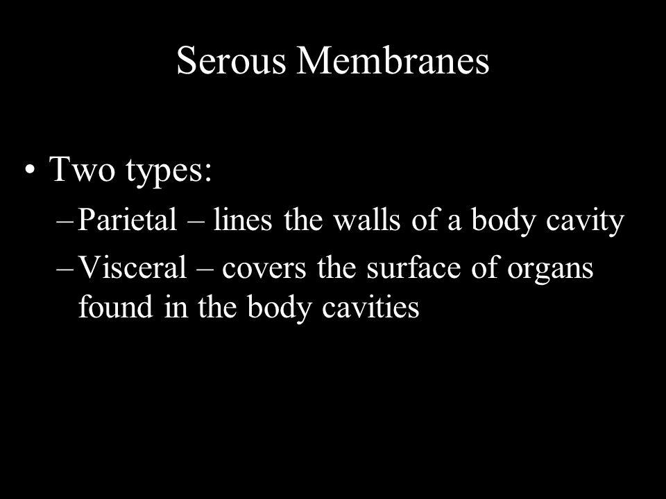 Serous Membranes Two types:
