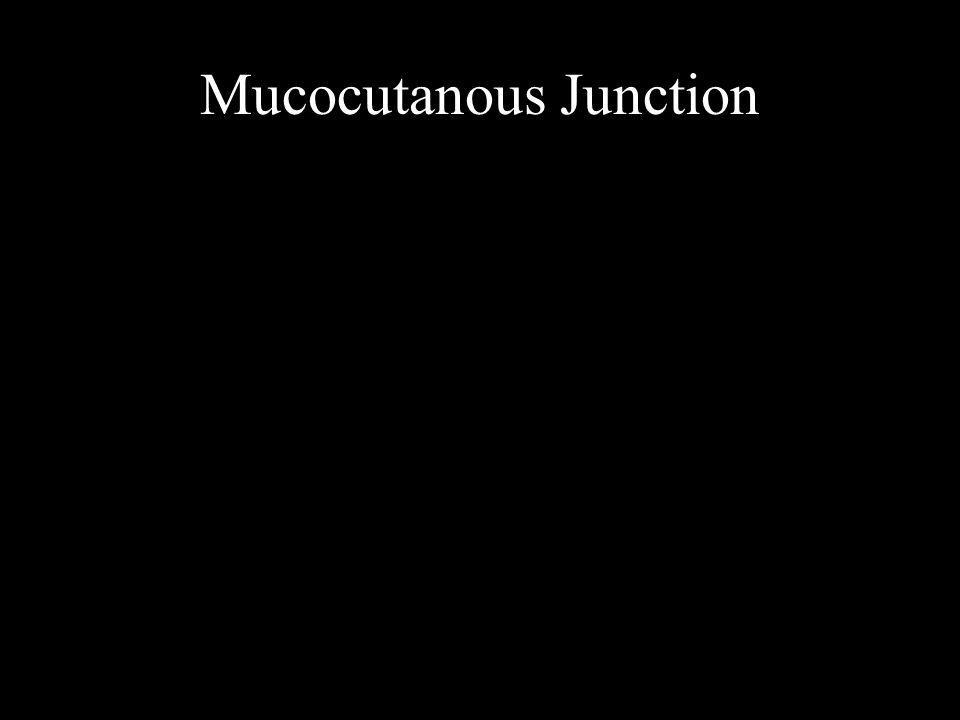 Mucocutanous Junction