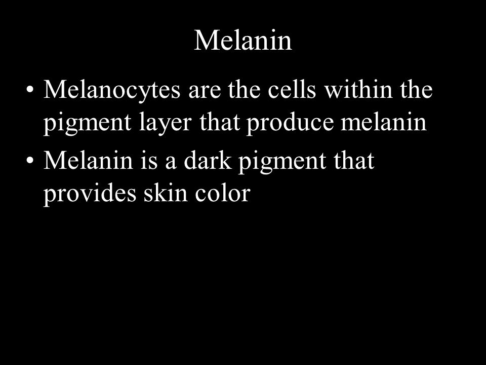 Melanin Melanocytes are the cells within the pigment layer that produce melanin.