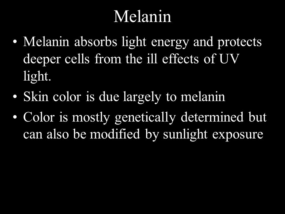Melanin Melanin absorbs light energy and protects deeper cells from the ill effects of UV light. Skin color is due largely to melanin.