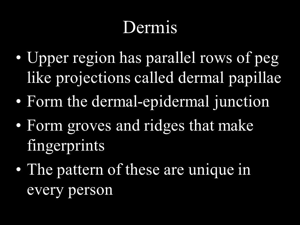 Dermis Upper region has parallel rows of peg like projections called dermal papillae. Form the dermal-epidermal junction.