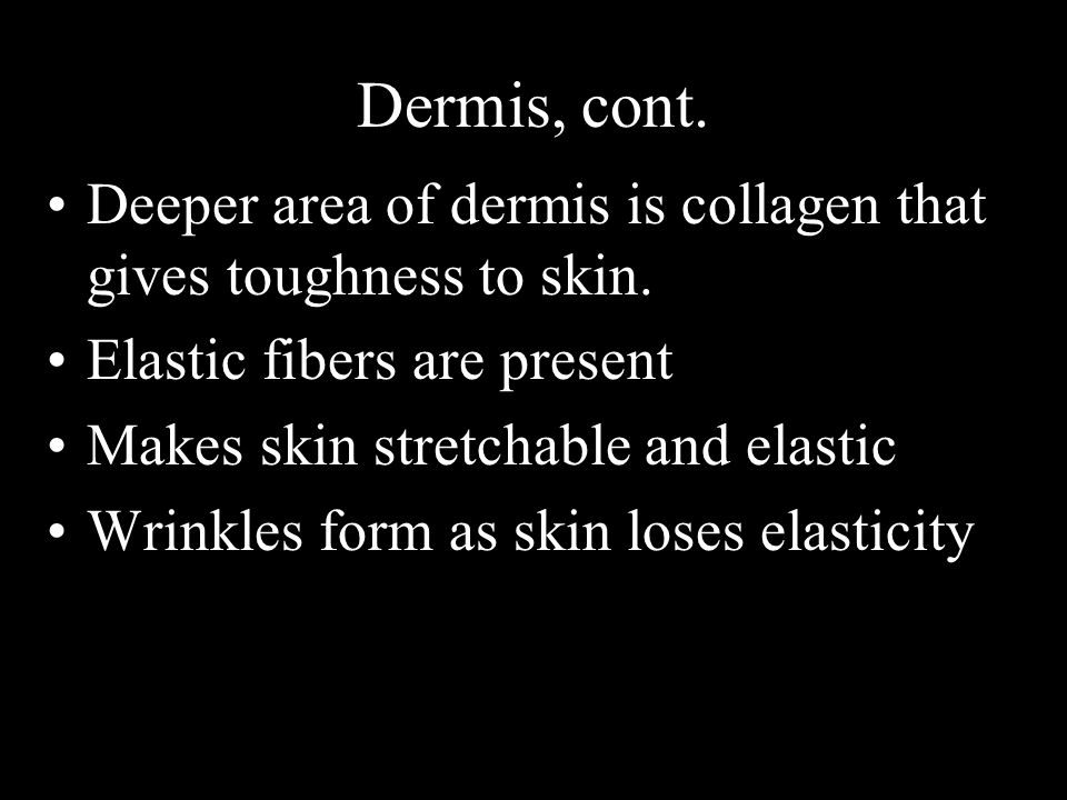 Dermis, cont. Deeper area of dermis is collagen that gives toughness to skin. Elastic fibers are present.