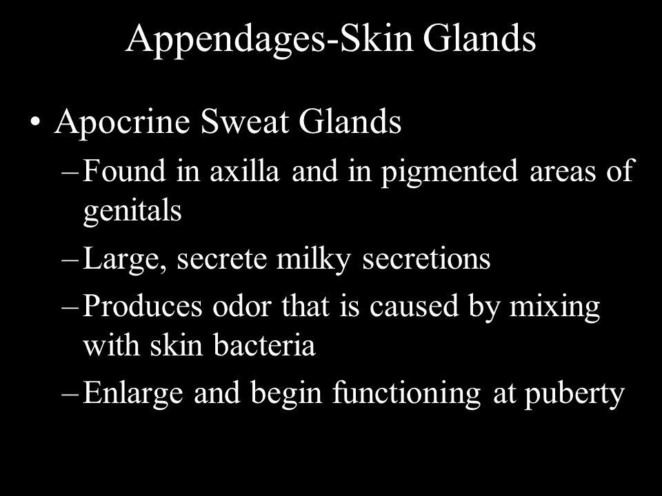 Appendages-Skin Glands