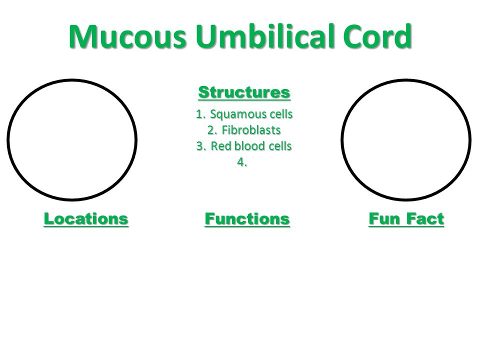 Mucous Umbilical Cord Structures Locations Functions Fun Fact
