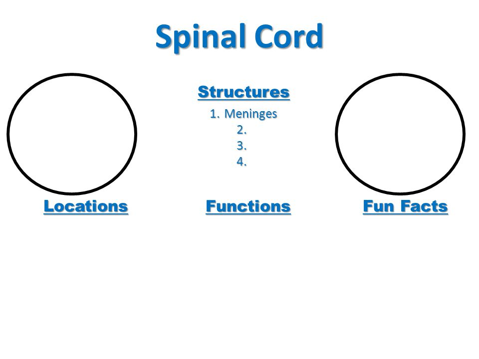 Spinal Cord Structures Meninges Locations Functions Fun Facts