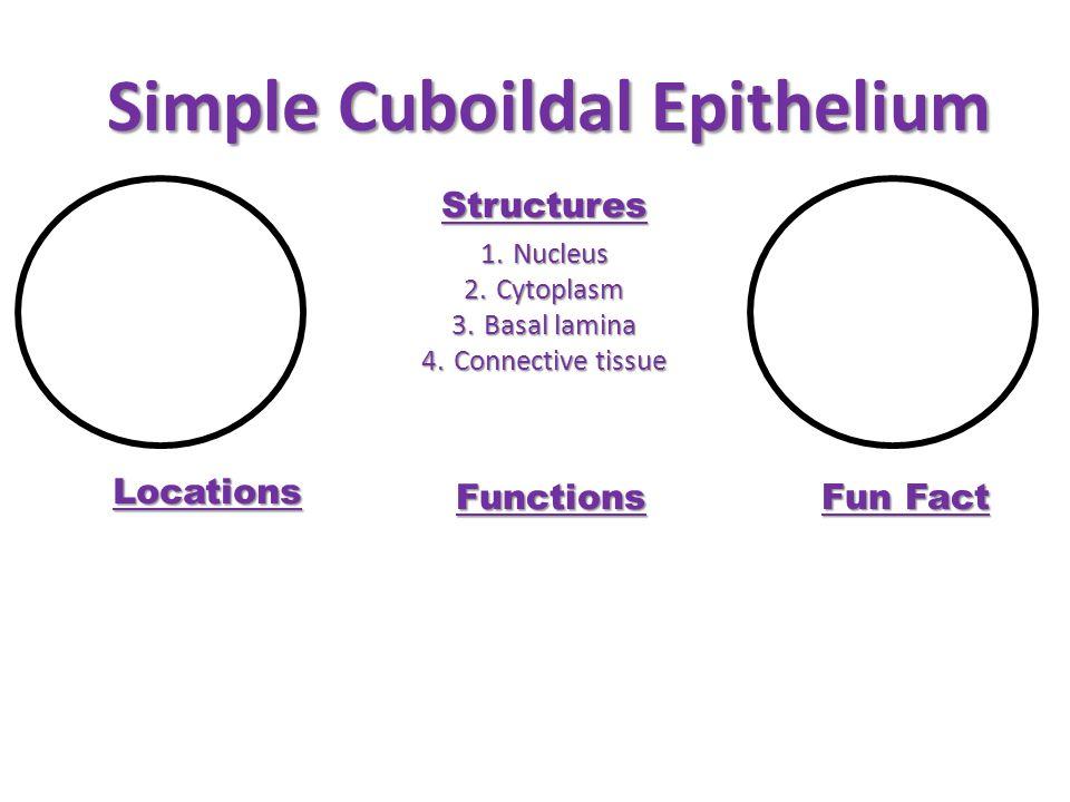 Simple Cuboildal Epithelium