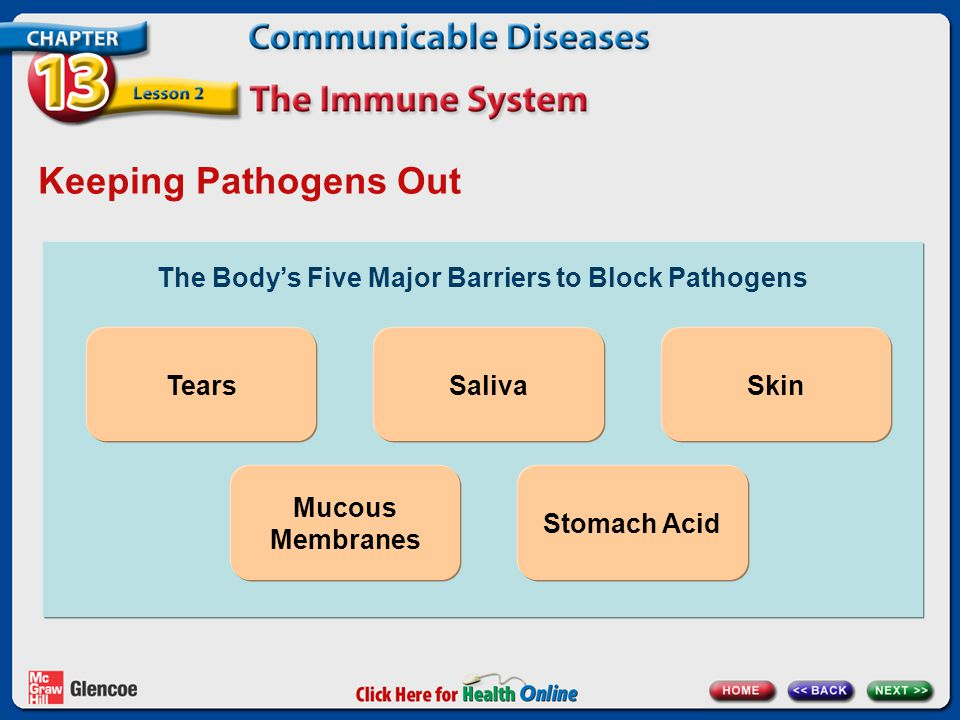 The Body's Five Major Barriers to Block Pathogens