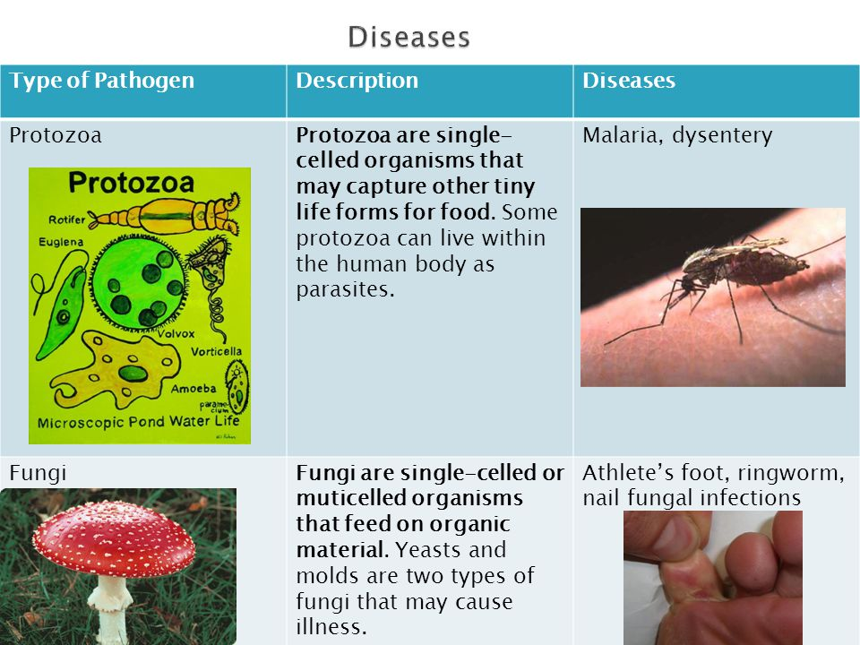 Diseases Type of Pathogen Description Diseases Protozoa