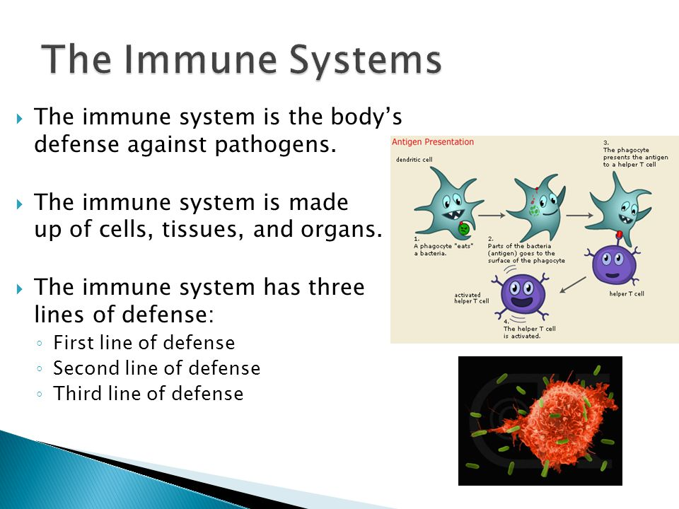 The Immune Systems The immune system is the body's defense against pathogens. The immune system is made up of cells, tissues, and organs.