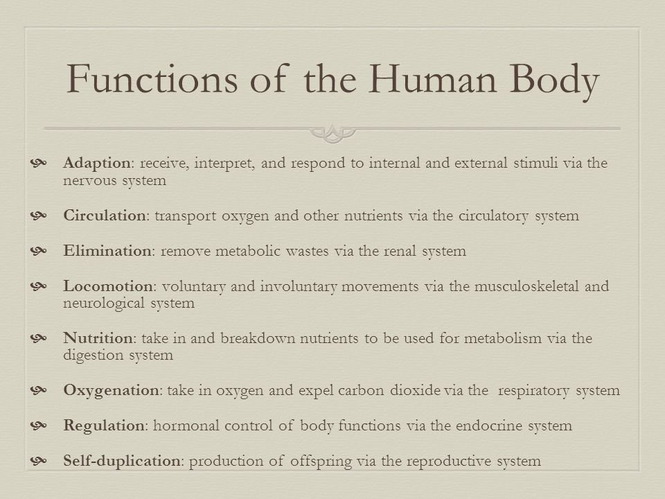 Functions of the Human Body