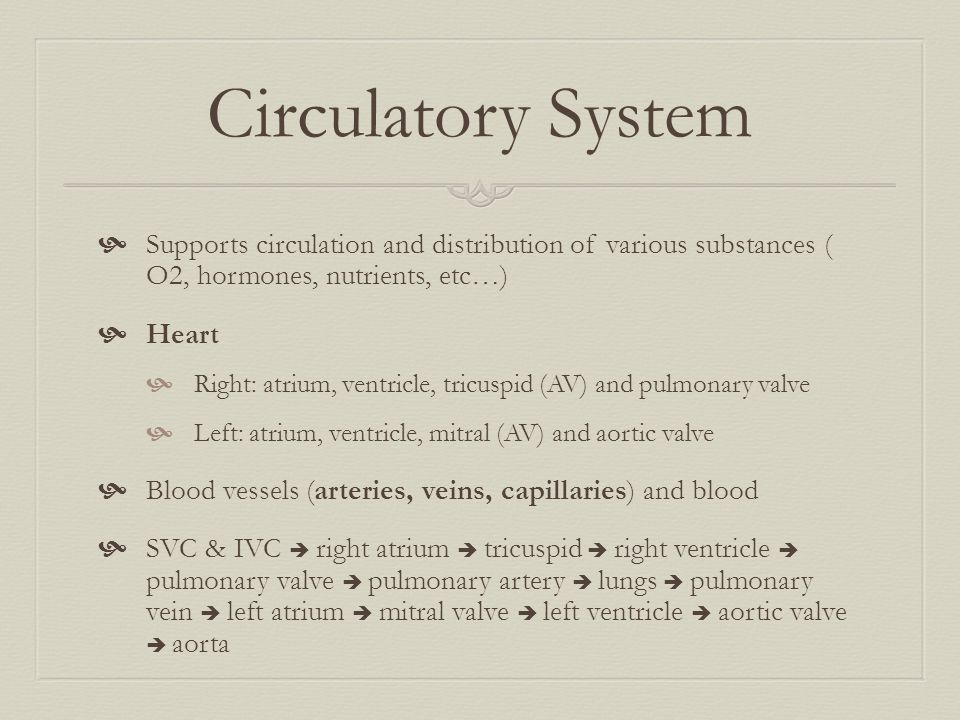 Circulatory System Supports circulation and distribution of various substances ( O2, hormones, nutrients, etc…)