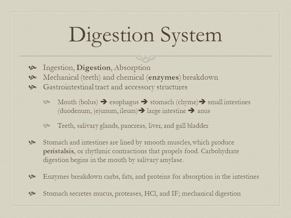 Digestion System Ingestion, Digestion, Absorption