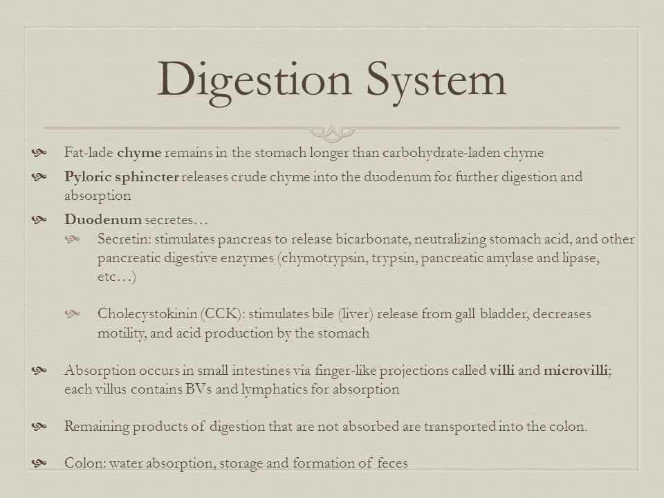 Digestion System Fat-lade chyme remains in the stomach longer than carbohydrate-laden chyme.