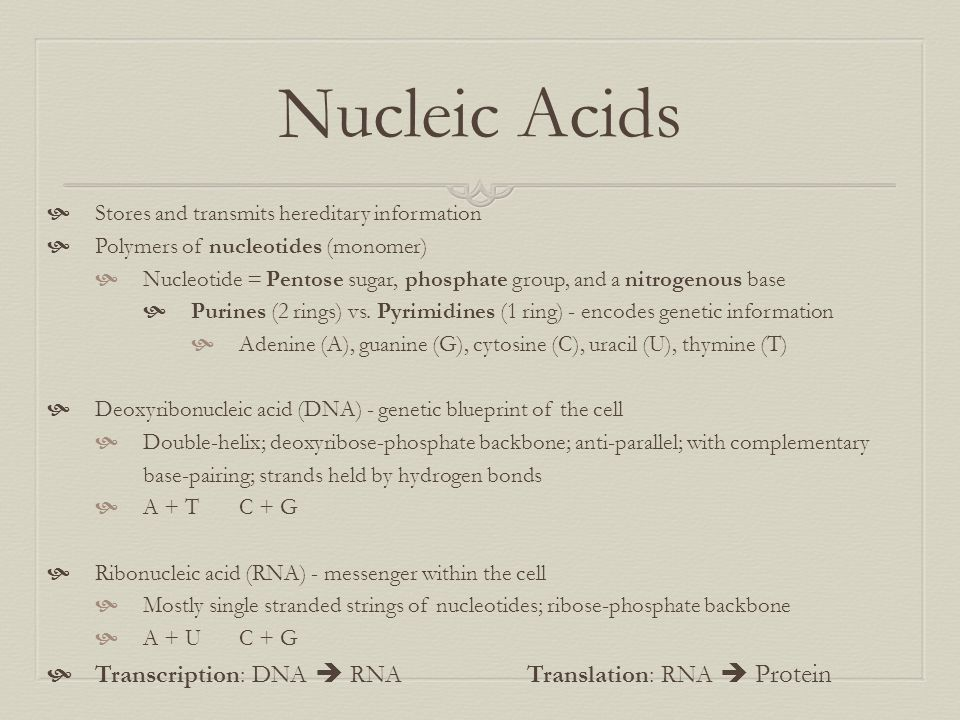 Nucleic Acids Transcription: DNA  RNA Translation: RNA  Protein