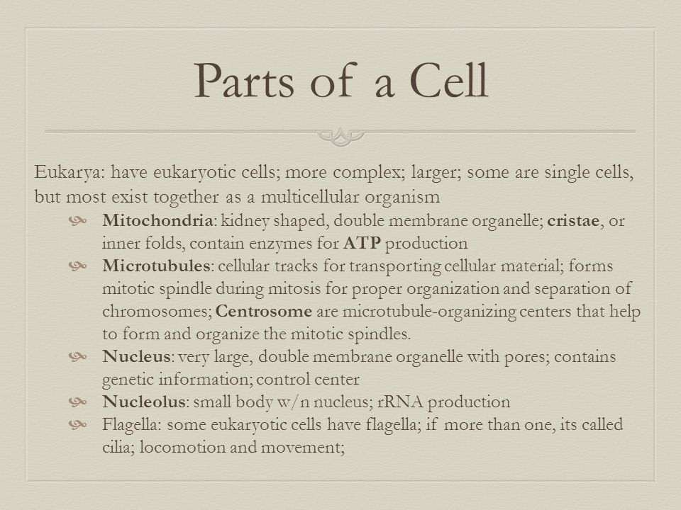Parts of a Cell Eukarya: have eukaryotic cells; more complex; larger; some are single cells, but most exist together as a multicellular organism.
