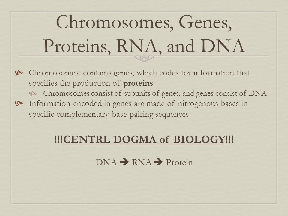 Chromosomes, Genes, Proteins, RNA, and DNA