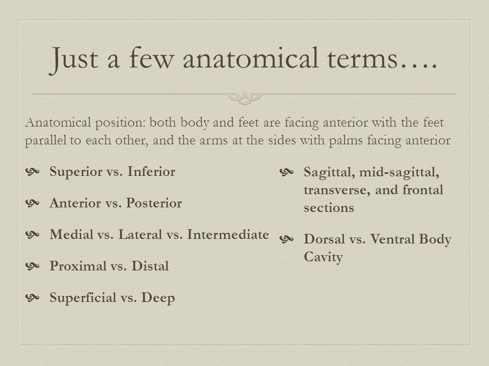 Just a few anatomical terms….