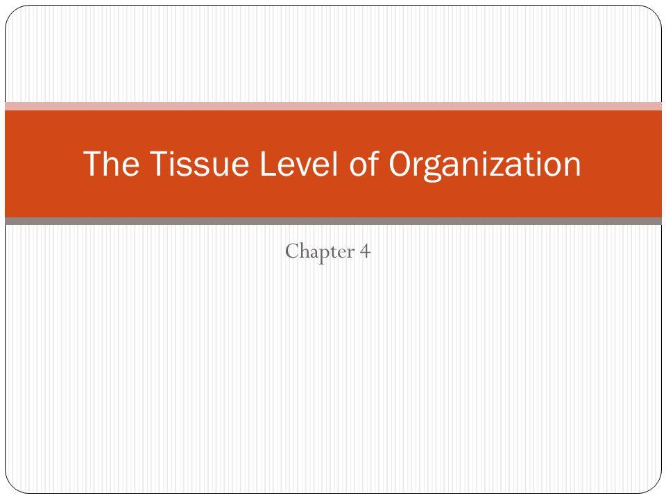 The Tissue Level of Organization