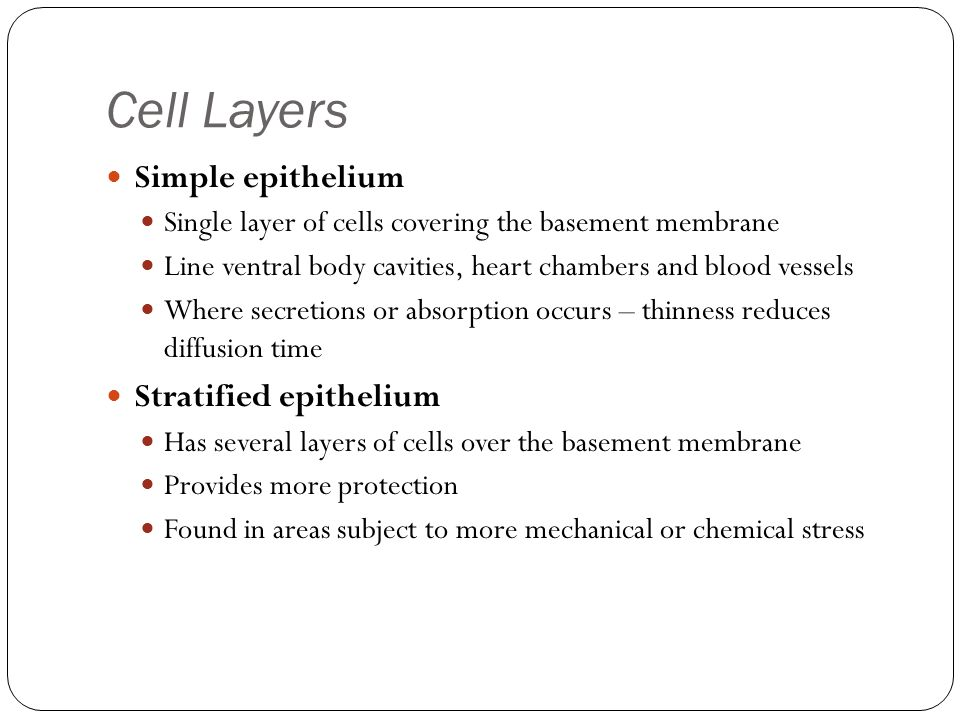 Cell Layers Simple epithelium Stratified epithelium