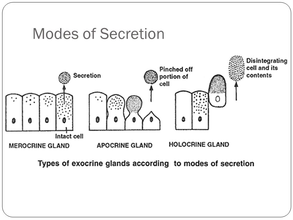 Modes of Secretion