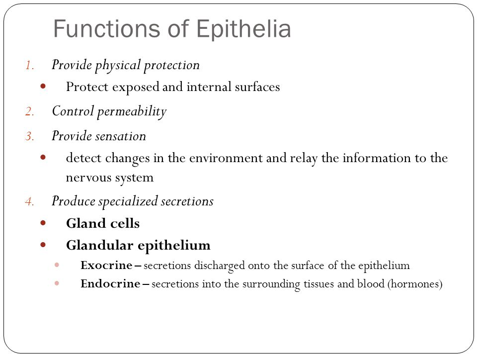 Functions of Epithelia